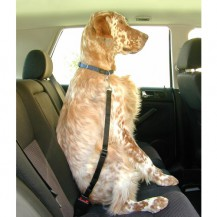 Clip perro cinturón de seguridad
